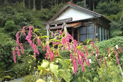 半田弁天と季節の花.jpg