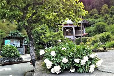 半田弁天と湧水汲み場と季節の花.jpg