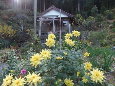 半田弁天の季節の花1.jpg