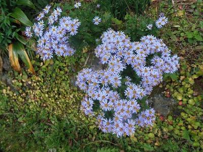 半田弁天の季節の花3.jpg