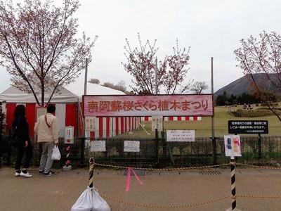 南阿蘇桜植木まつり1.jpg