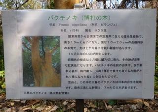 博打の木説明.jpg