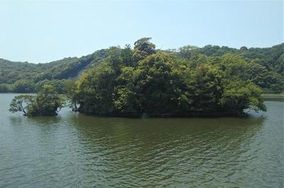 厚東川ダム小野湖 親子島.jpg
