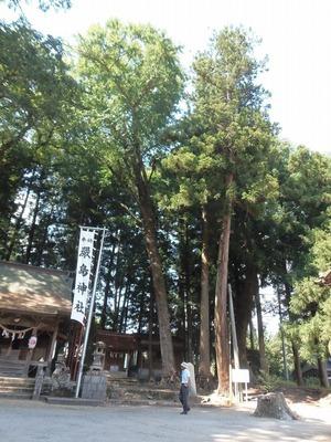 厳島神社の巨樹群.jpg