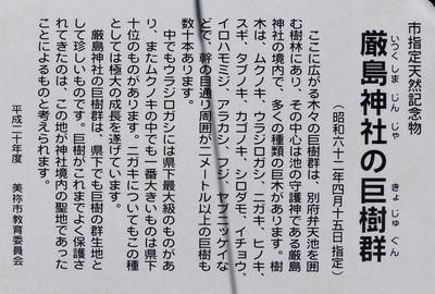 厳島神社の巨樹群説明.jpg