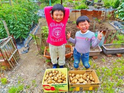 収穫したジャガイモ.jpg