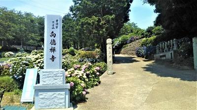 向徳禅寺.jpg