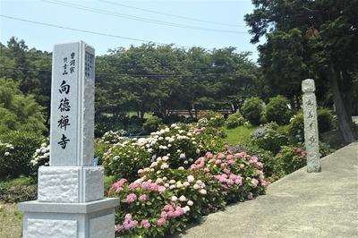向徳禅寺1.jpg