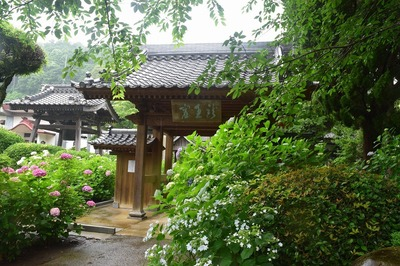 向徳禅寺の山門と紫陽花.jpg