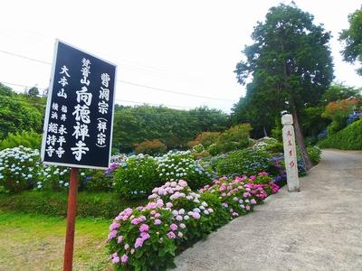 向徳禅寺入口.jpg
