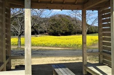 四阿からの菜の花.jpg