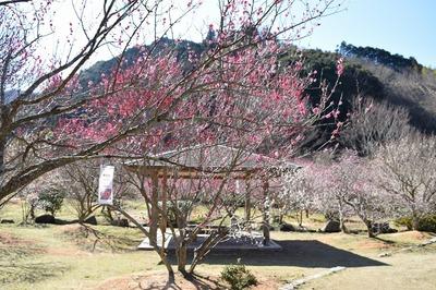 四阿と梅の花1.jpg