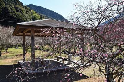 四阿と梅の花2.jpg