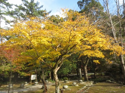 境内入口の別の秋色.jpg