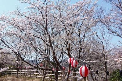 夜桜準備1.jpg