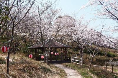 夜桜準備2.jpg