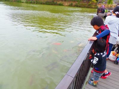 大きな鯉.jpg
