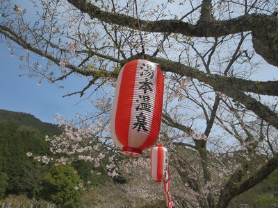 大寧寺の桜.jpg