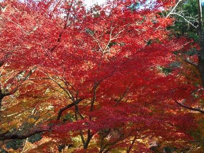 大寧寺の秋色2.jpg