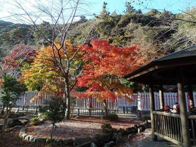 大寧寺の秋色3.jpg