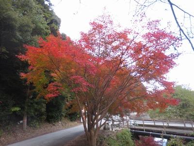 大寧寺入口の紅葉.jpg