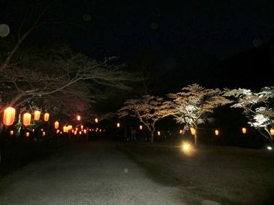 大寧寺夜桜1.jpg
