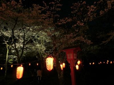 大寧寺夜桜2.jpg