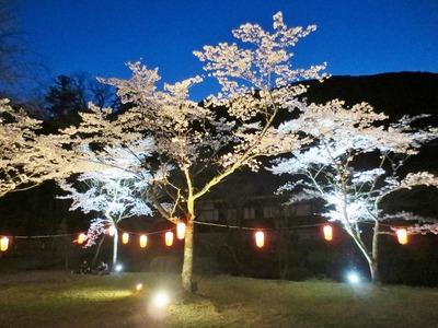 大寧寺夜桜3.jpg