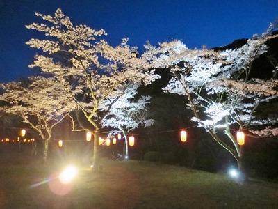 大寧寺夜桜4.jpg