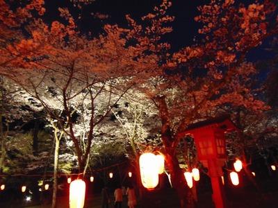 大寧寺夜桜5.jpg