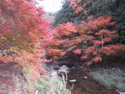 大寧寺川沿いの紅葉.jpg
