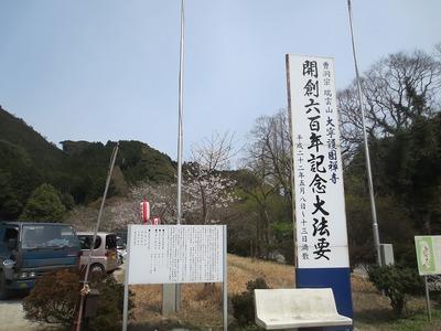 大寧寺桜1.jpg