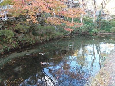 大寧寺秋色と池.jpg