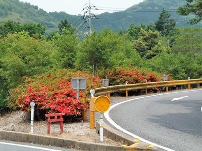 大日比峠手前の季節の花2.jpg