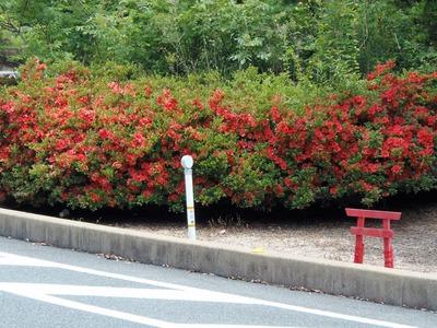 大日比峠手前の季節の花3.jpg