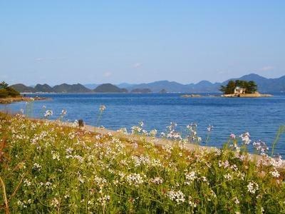 大日比弁天島とダイコンの花.jpg