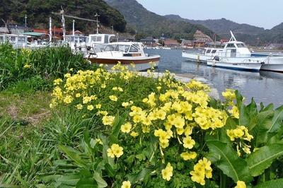 大泊港と季節の花.jpg