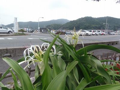 大湊の季節の花.jpg