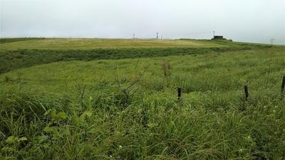 大草原のグリーン1.jpg