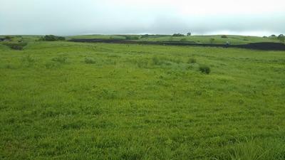 大草原のグリーン2.jpg