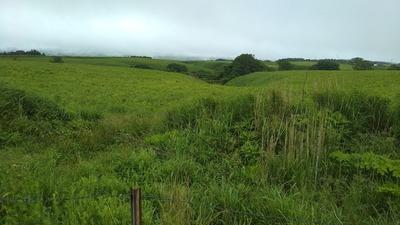 大草原のグリーン3.jpg