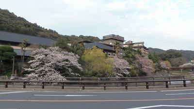 大谷山荘と桜1.jpg