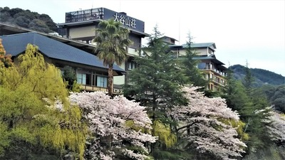 大谷山荘と桜2.jpg
