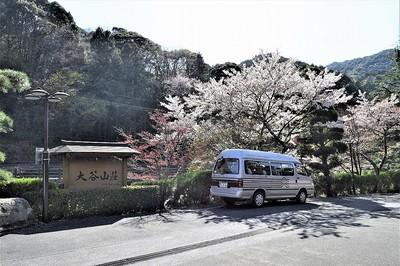 大谷山荘前の桜1.jpg