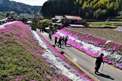 大道理芝桜展望所からの眺望1.jpg
