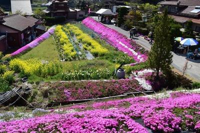 大道理芝桜展望所からの眺望2.jpg