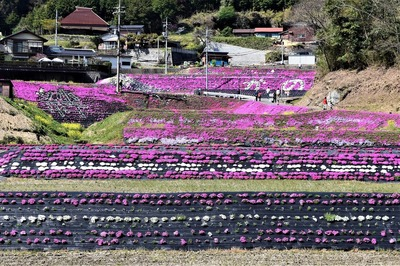 大道理芝桜展望所からの眺望3.jpg