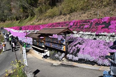 大道理芝桜展望所からの眺望4.jpg