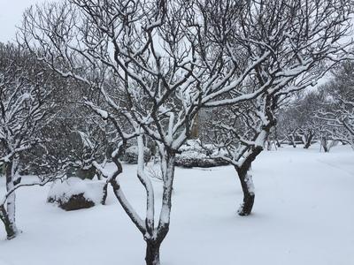 天満宮の梅と雪.JPG