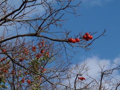 季節の柿.jpg